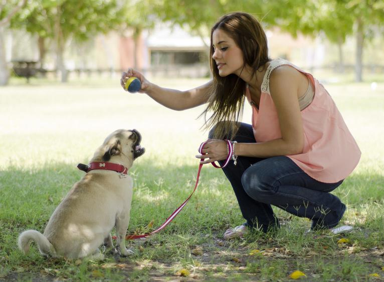 let øvede hundetræning