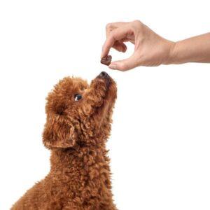 Hjerteformet godbidder fra Hunter brugt til hundetræning.