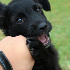 Hvalpetræning i Rødekro, alle hunderacer er velkommen. Weekendhold