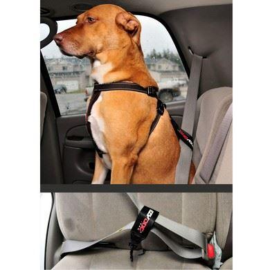 Sikkerheds strop til bilen