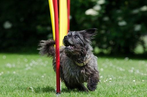 Agility for familiehunde i Rødekro.