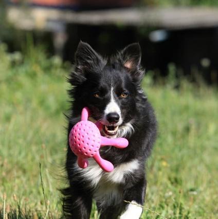 Pink Kiwi Walker Let's Play! Octopus HundeGodbid