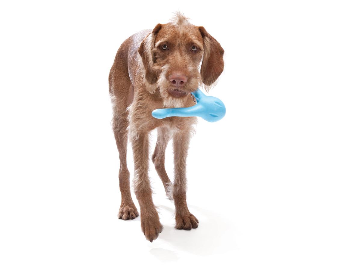 Blå West Paw Tizzi aktivitetslegetøj fra HundeGodbid