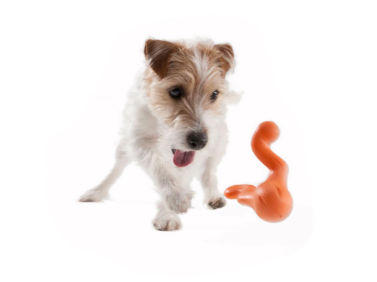 West Paw Tizzi aktivitetslegetøj til lille hund fra HundeGodbid