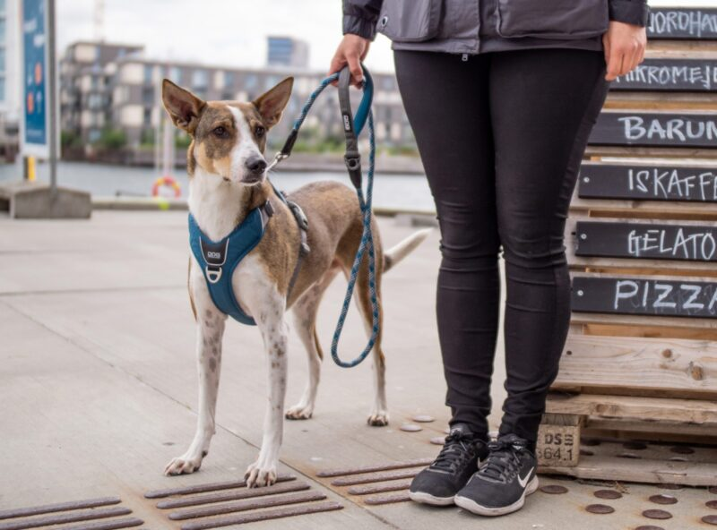 Comfort Walk Pro Sele Hund HundeGodbid