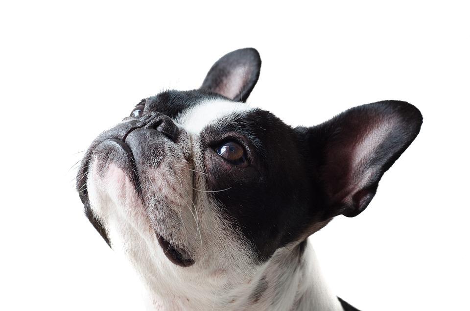 unghunde hos HundeGodbid